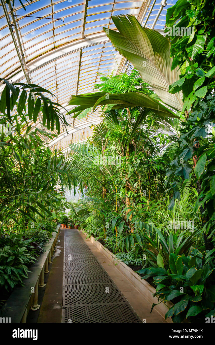 Victorian Palm House Greenhouse Interior With Exotic Tropical Trees