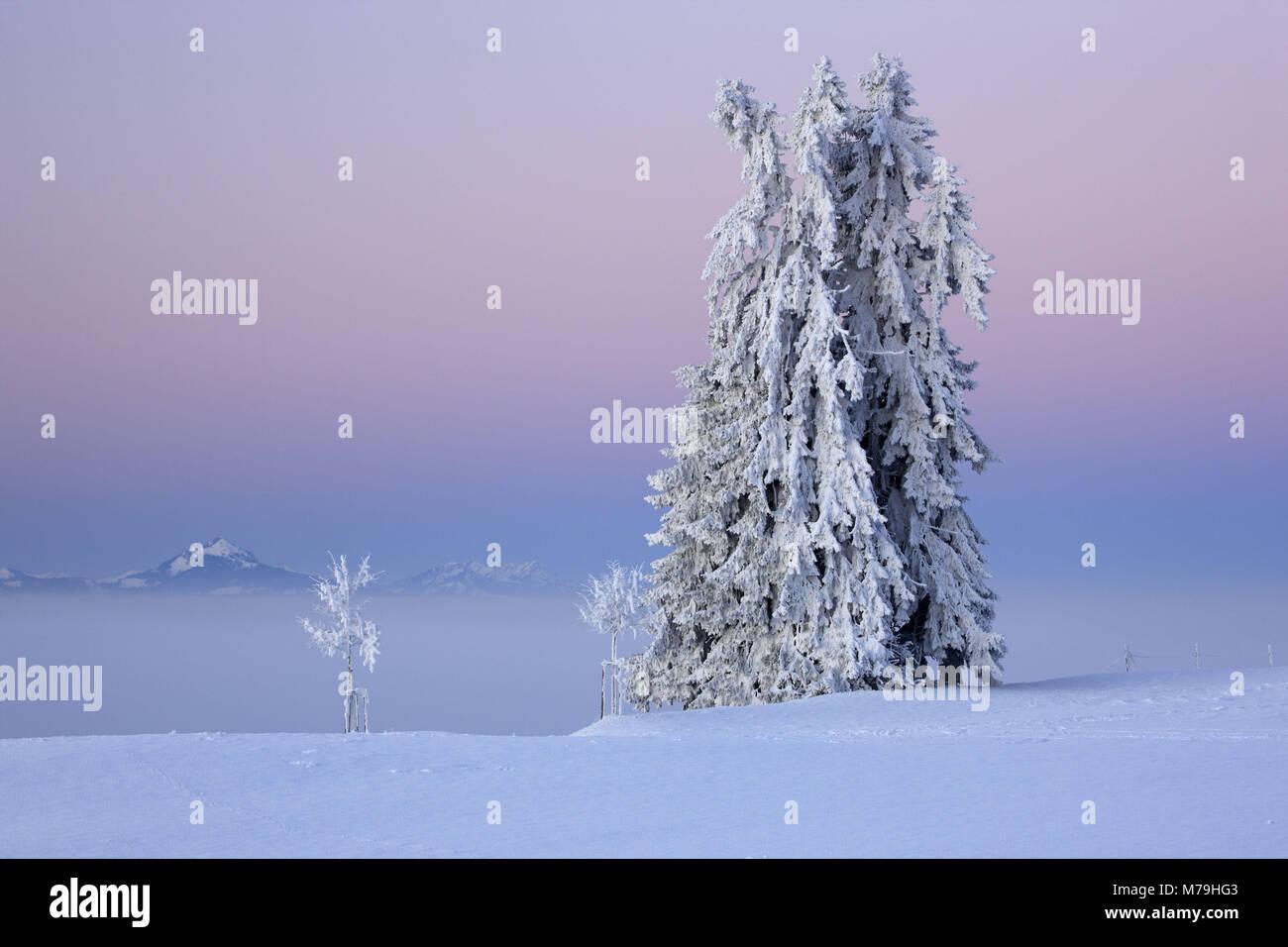Germany, Bavaria, Allgäu, east Allgäu, Königswinkel, Auerberg, winter scenery, Grünten, Stock Photo