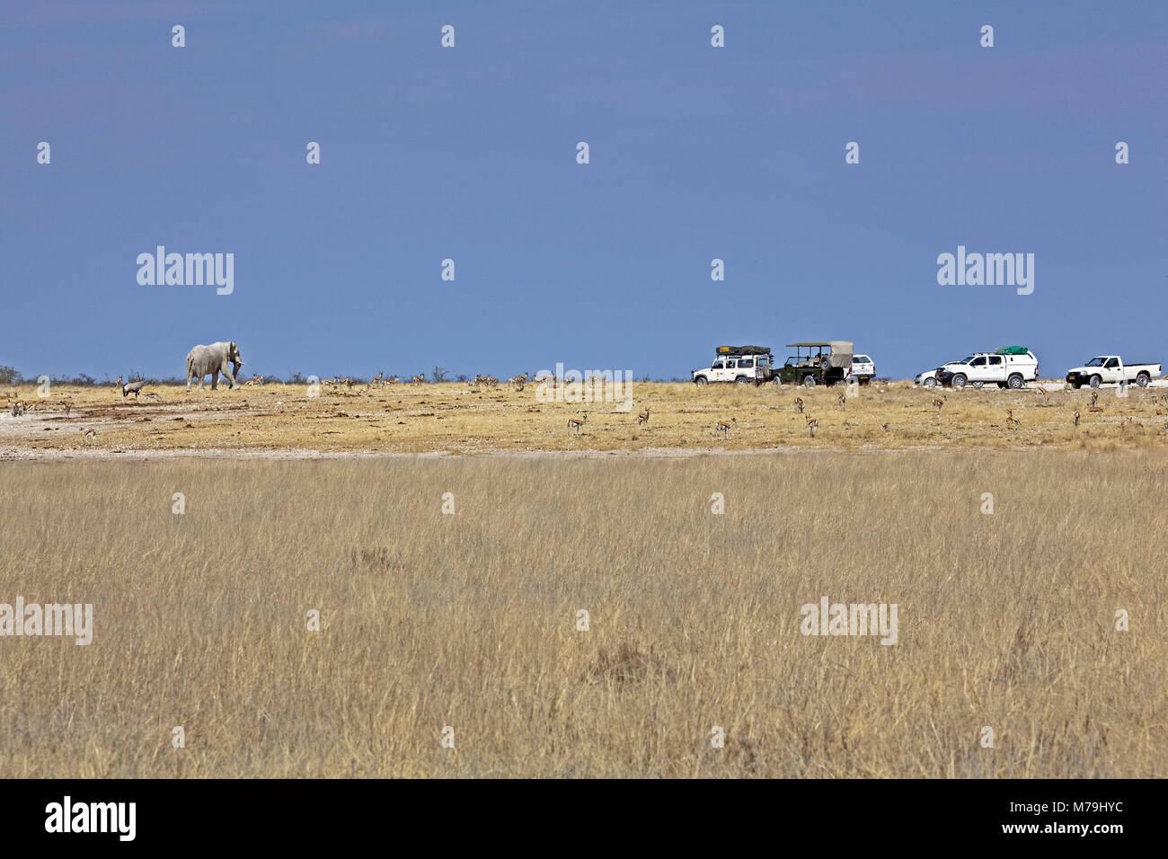 Africa, South-West Africa, Namibia, Etoscha National Park, elephant, Oryx antelops, jeep, Stock Photo