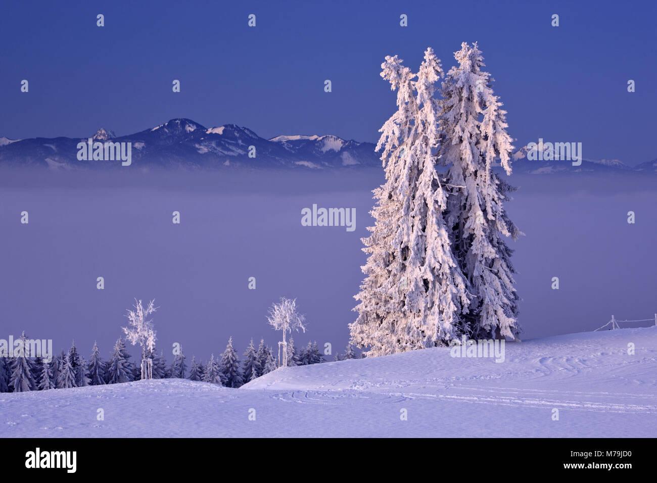 Germany, Bavaria, Allgäu, east Allgäu, Königswinkel, Auerberg, winter scenery, Sorgschrofen, Grünten, Stock Photo
