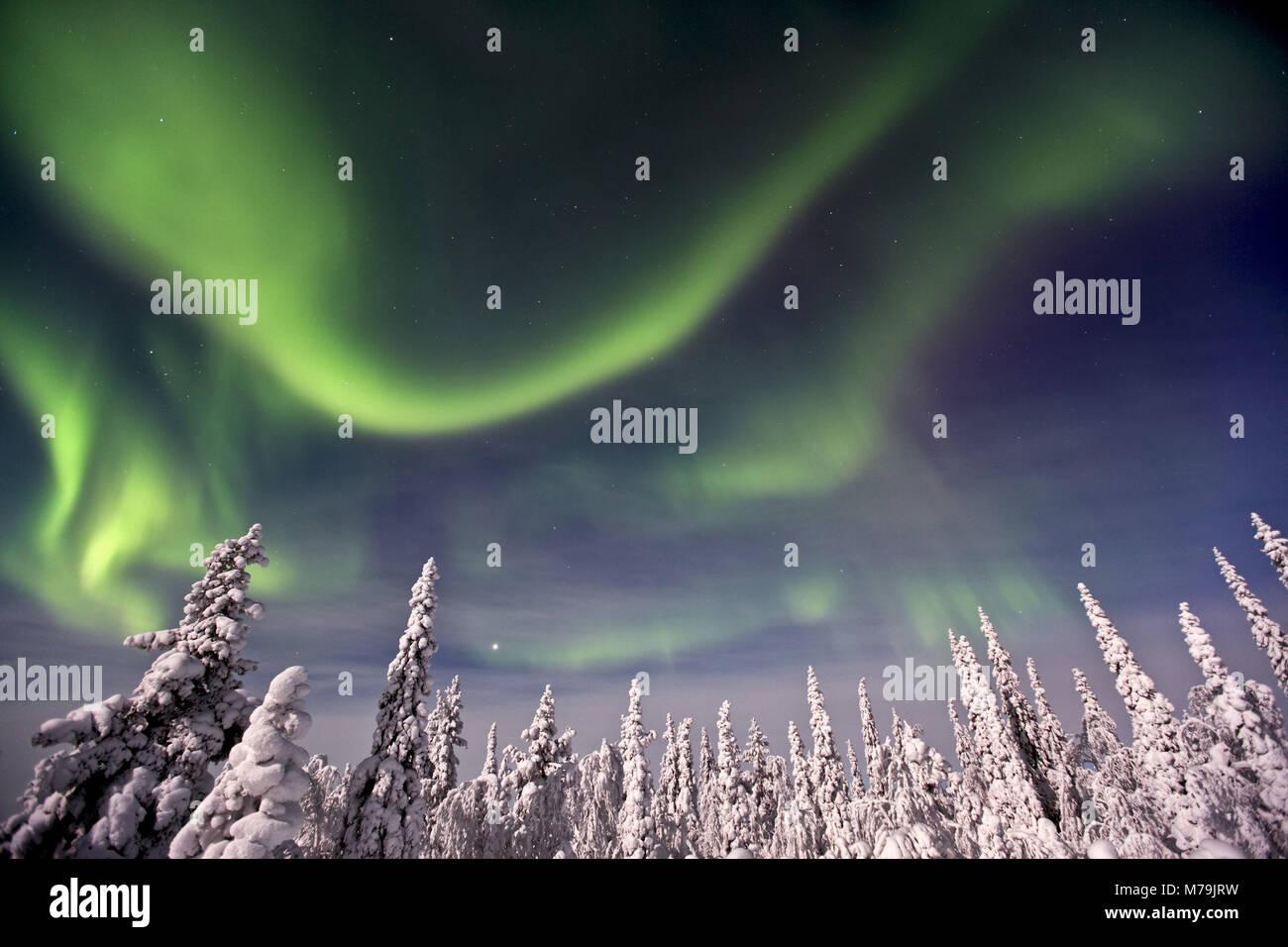 Sweden, Lapland, northern lights, Aurora borealis, - Stock Image