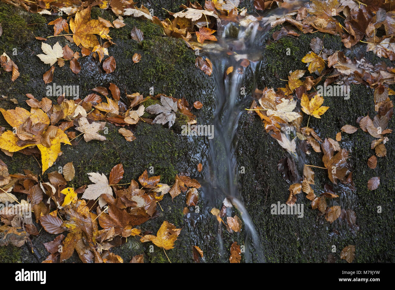 Waterfall on the way to the 'Herzogstand', Bavarian pre-alpine, Alpine foreland, alps, Bavarian uplands, - Stock Image