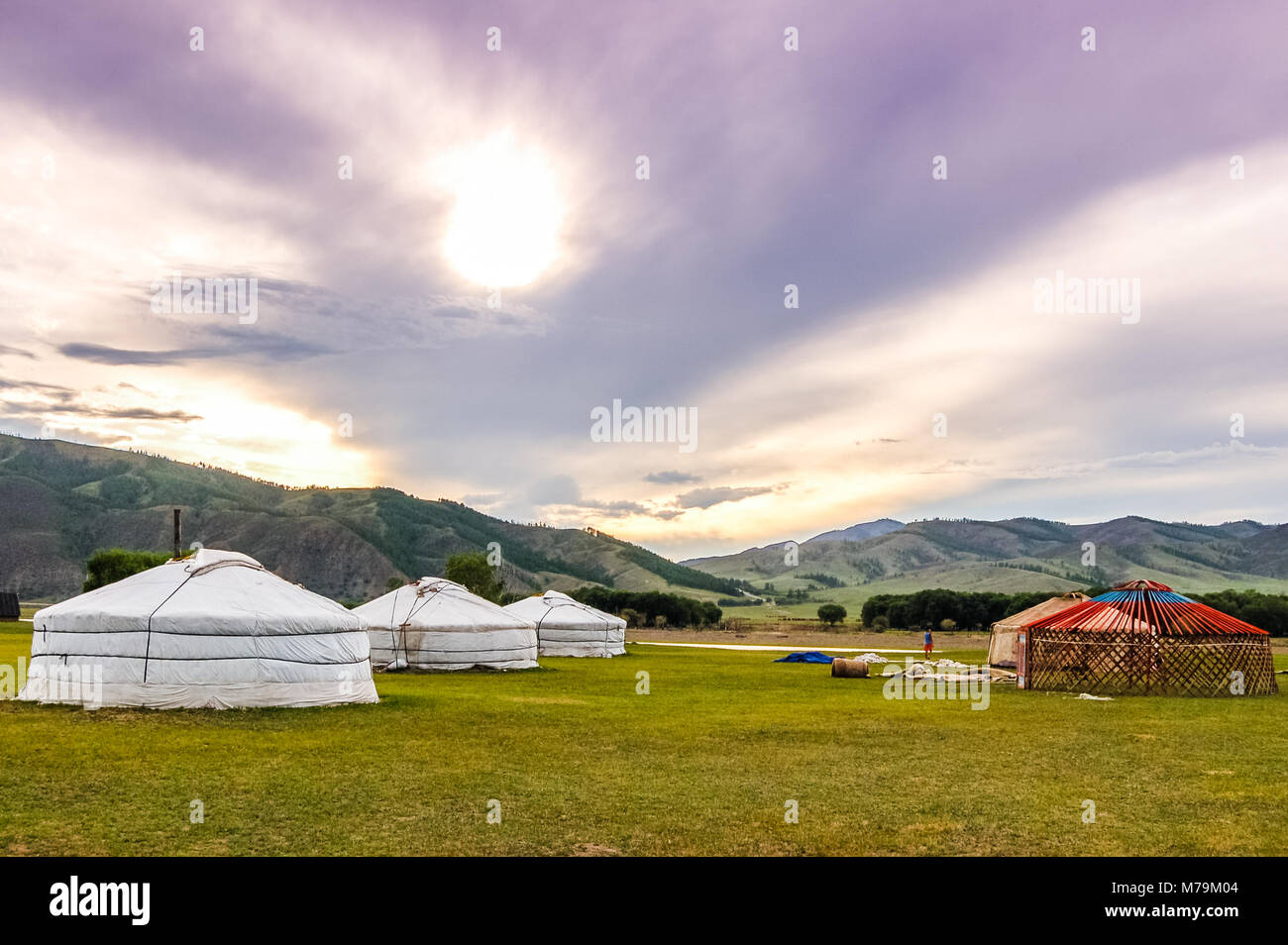 Constructing a Mongolian yurt called a ger on central Mongolian steppe - Stock Image
