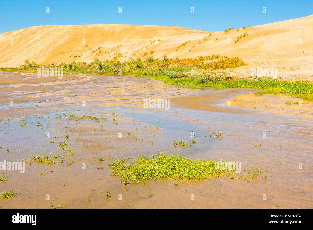 Giant dunes loom above the Te Paki Stream, which runs down to to Ninety Mile Beach, North Island, New Zealand - Stock Image