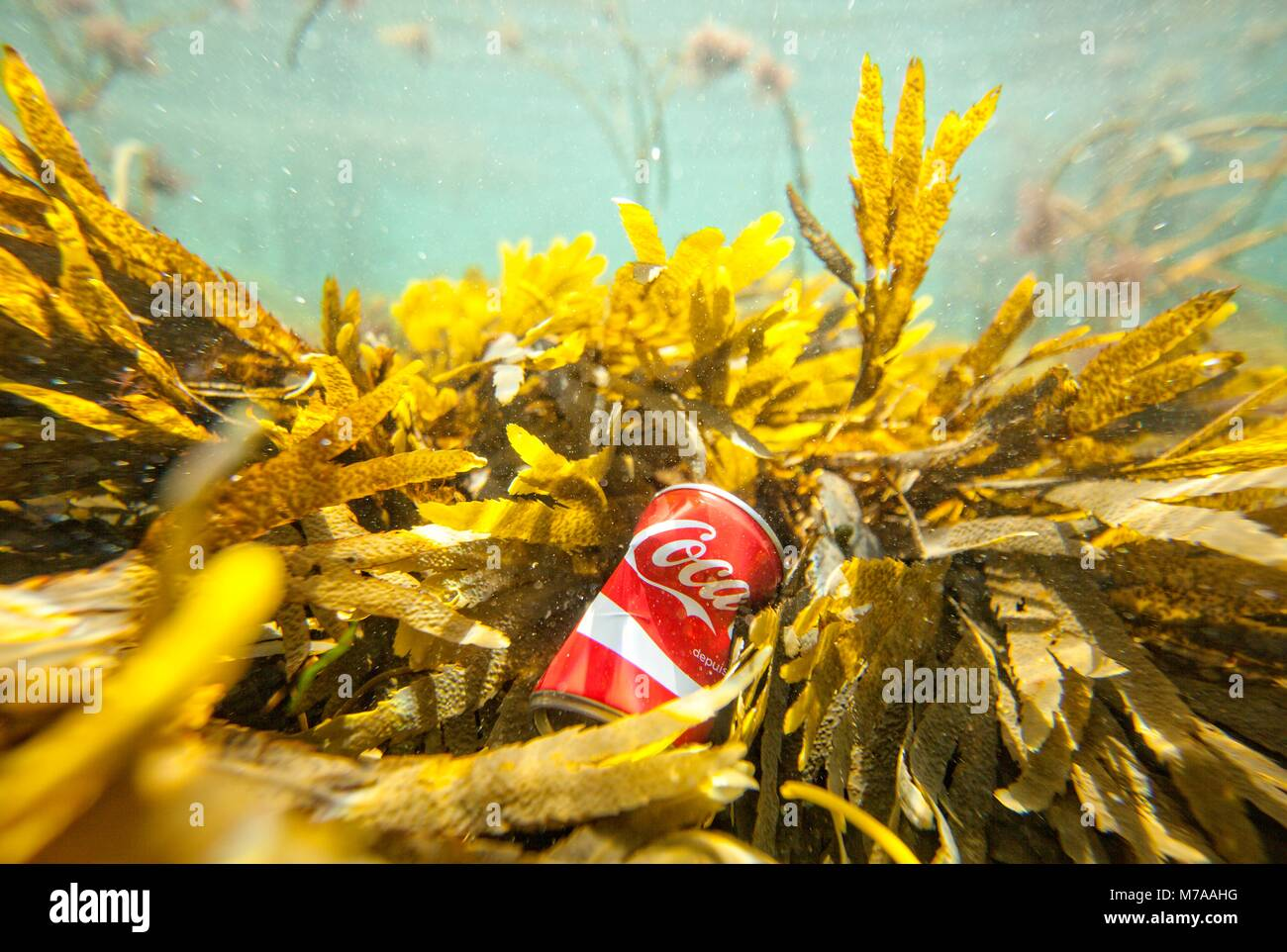 Trash floating on the Brittany shore line,Le Courégant, France. Water pollution is largely caused by human - Stock Image