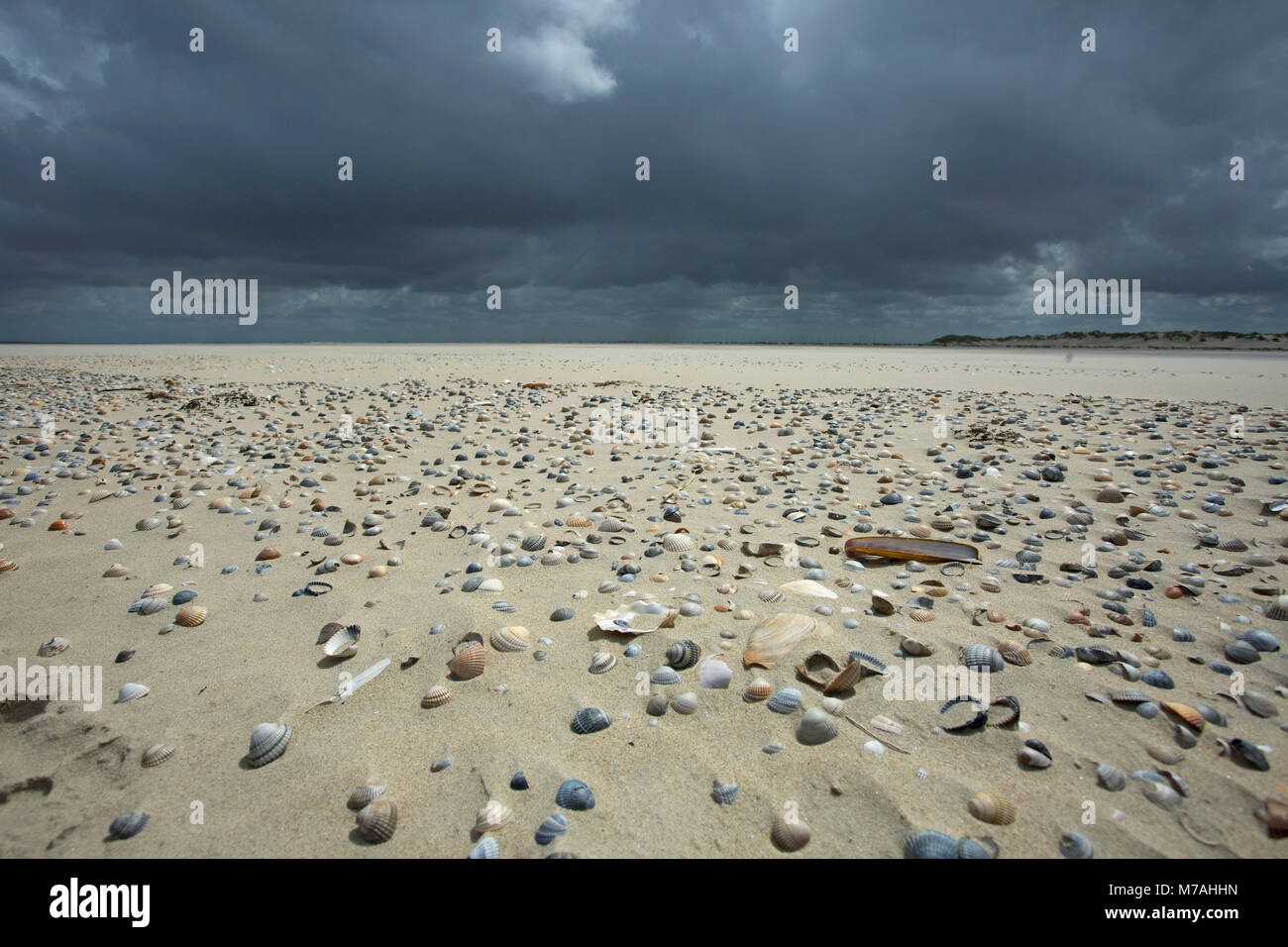 Dark clouds over the sand spit littered with mussels on the Osterhook in the east of the East Frisian island of - Stock Image