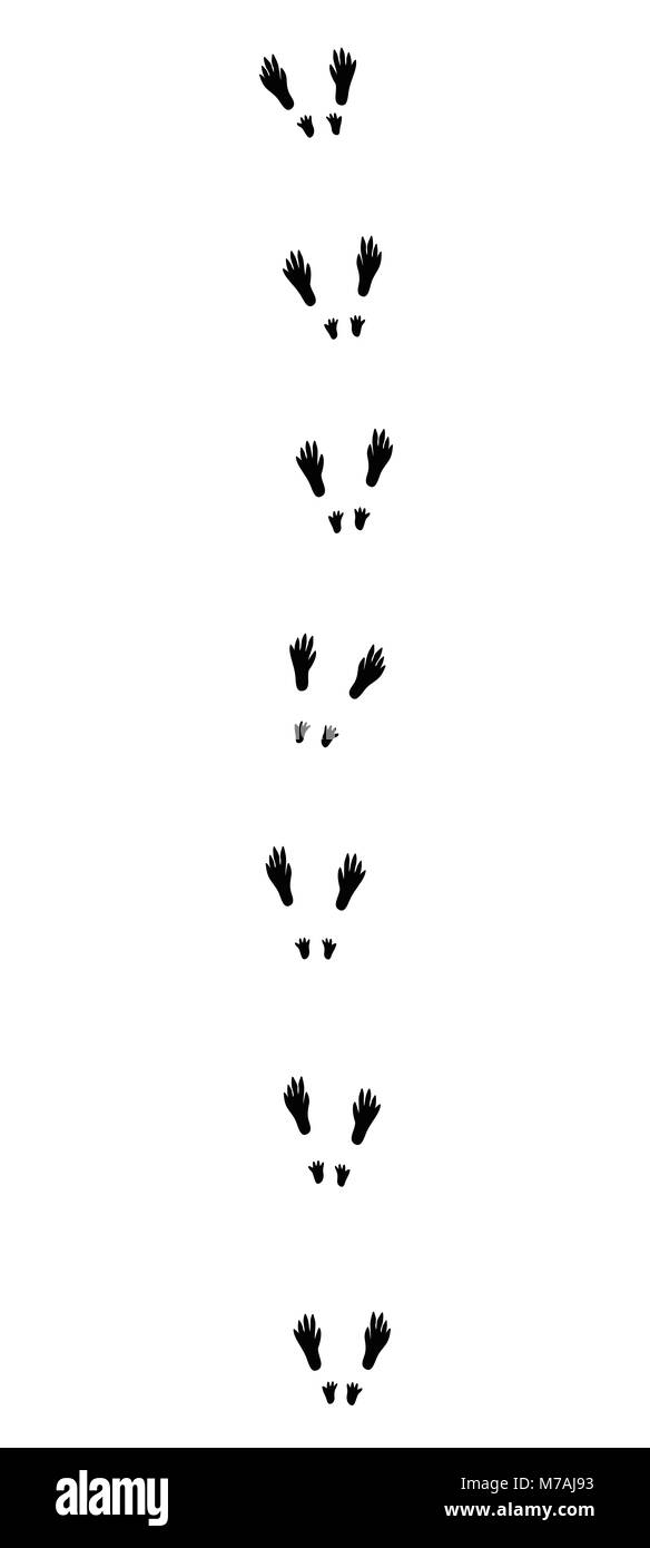 Squirrel tracks. Typical footprints when hopping - black icon illustration on white background. - Stock Image