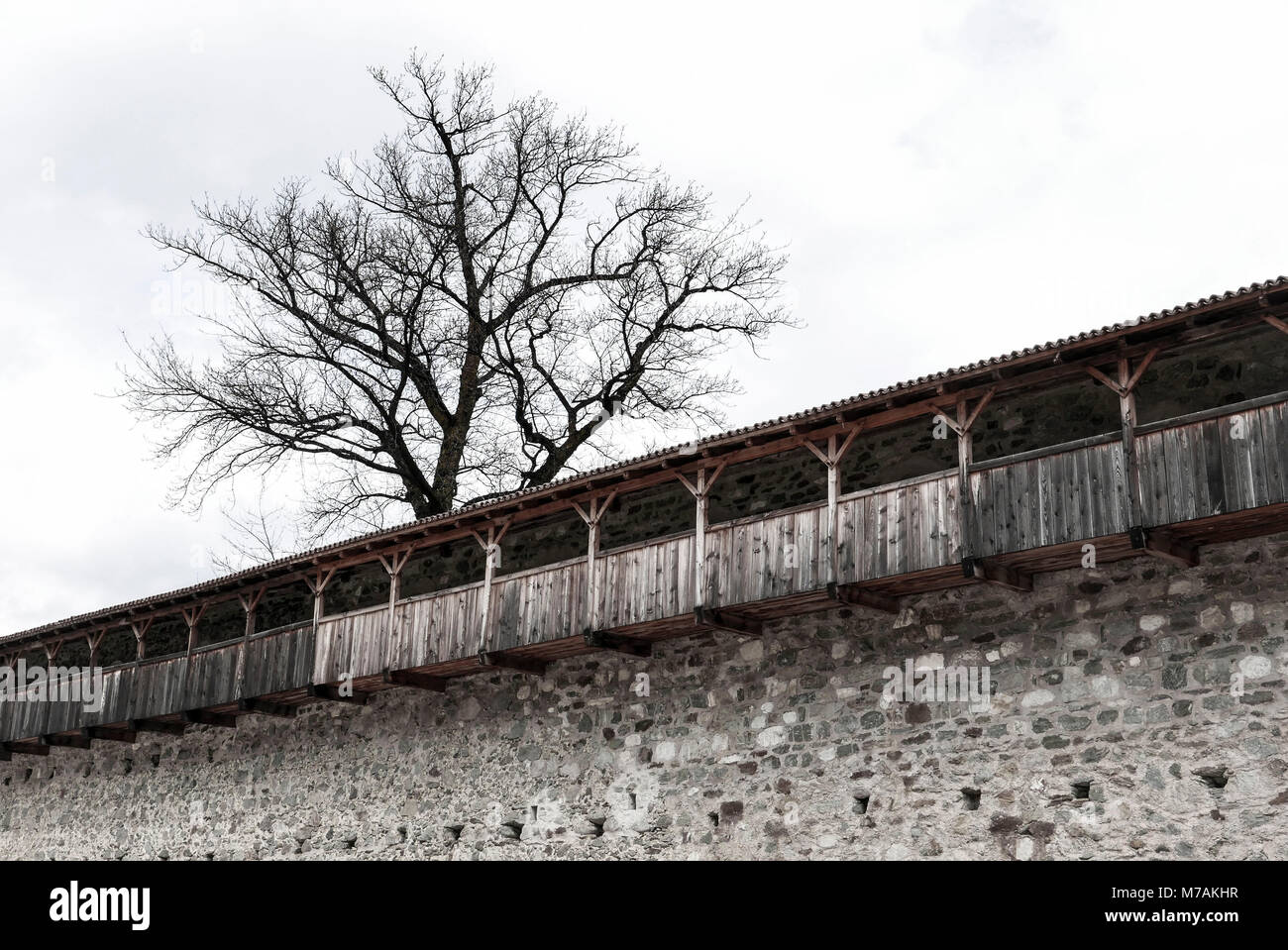 round path and city wall of Glurns with leafless tree, Vinschau, South Tirol - Stock Image