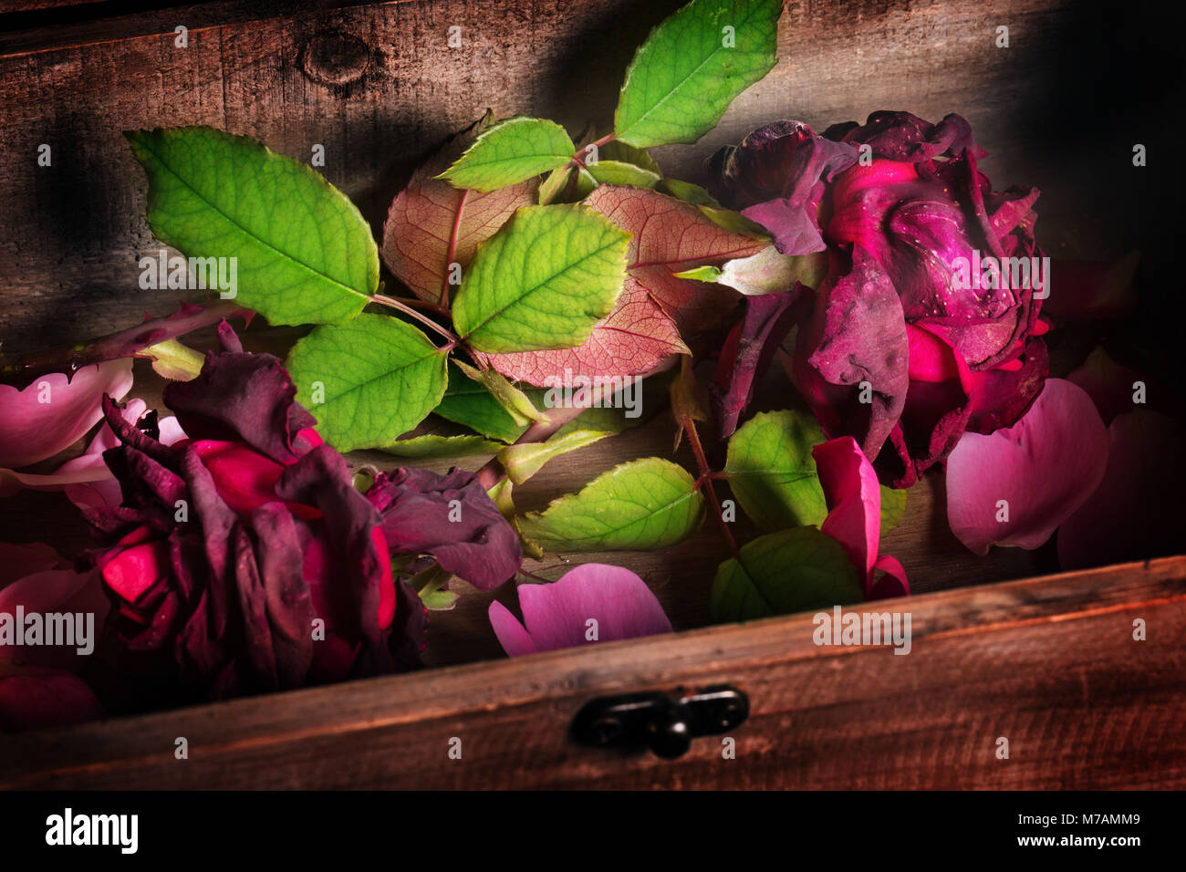 Transitoriness, fading roses - Stock Image
