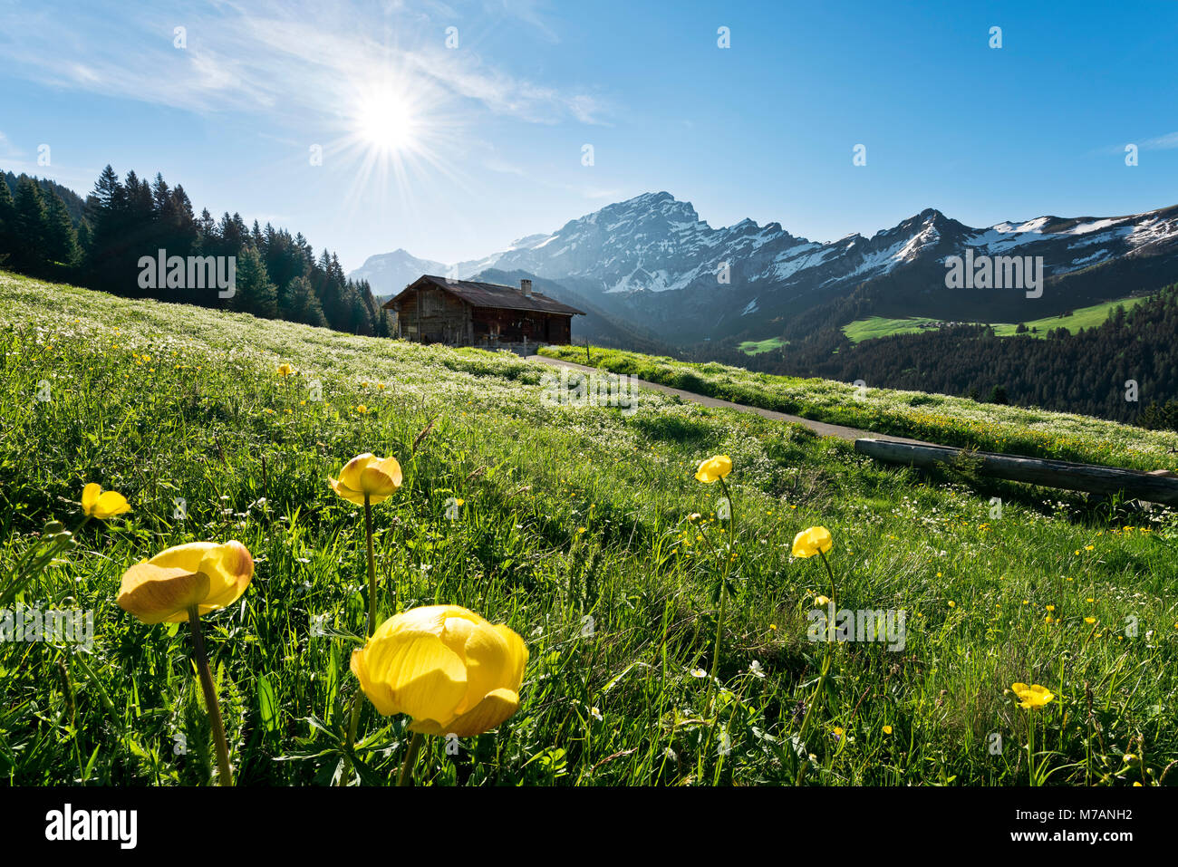 Early sunlight with flower meadow and alp near Culan, Bernese Alps, Vaud, Switzerland - Stock Image