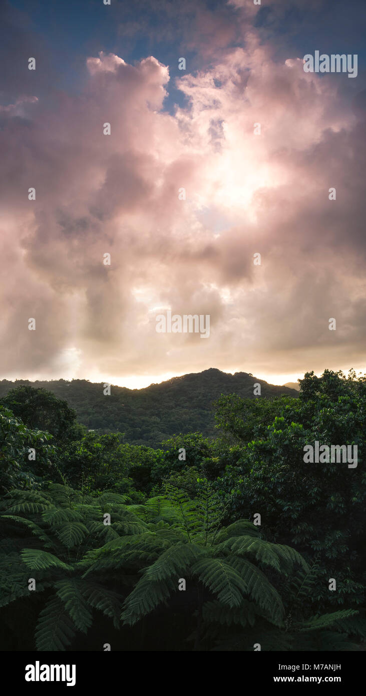 View over the Yunque Rainforest during epic sunrise on the Caribbean island Puerto Rico - Stock Image