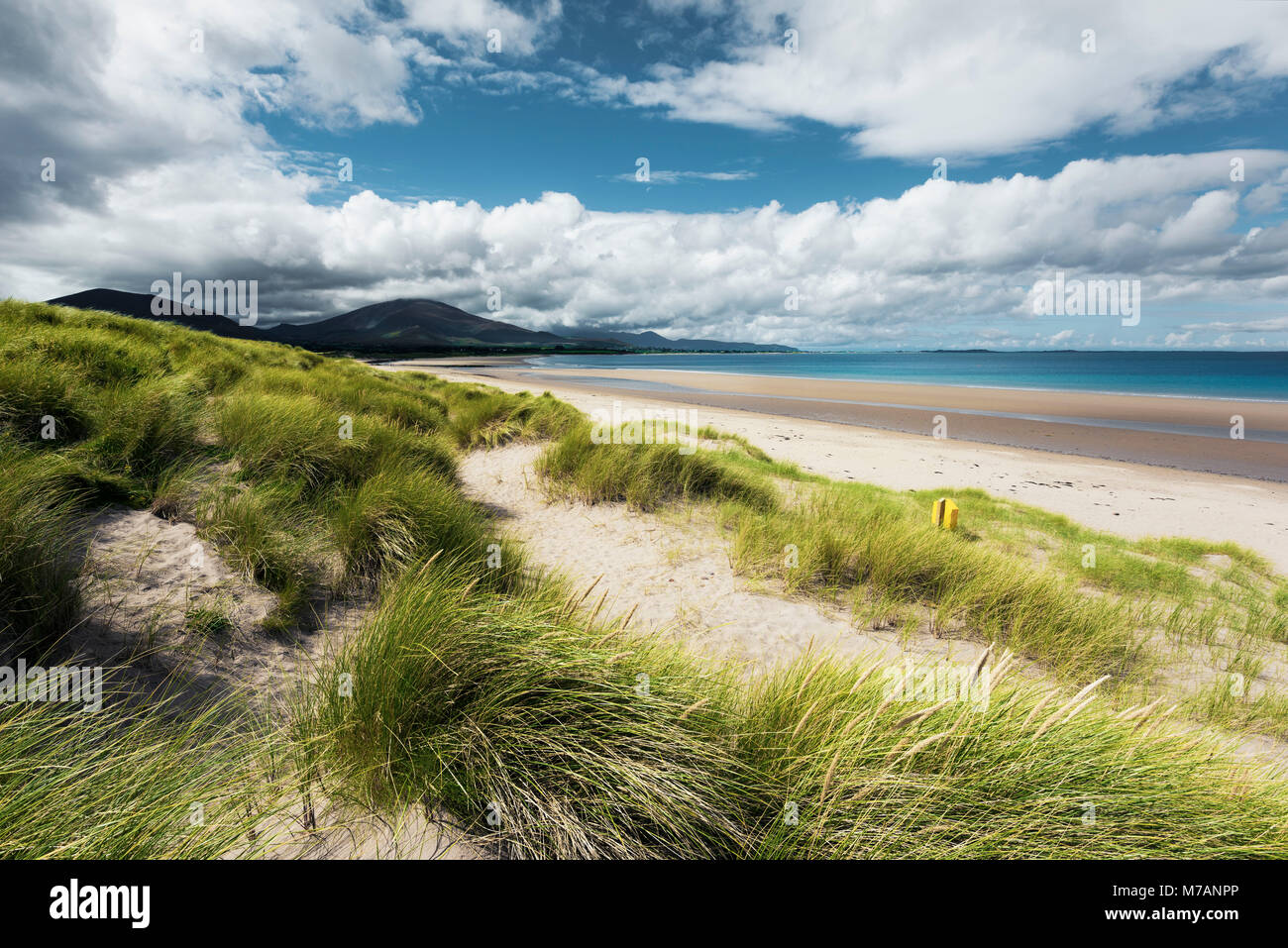 Beach scene with dune grass near Trallee Bay, Kerry, Ireland - Stock Image
