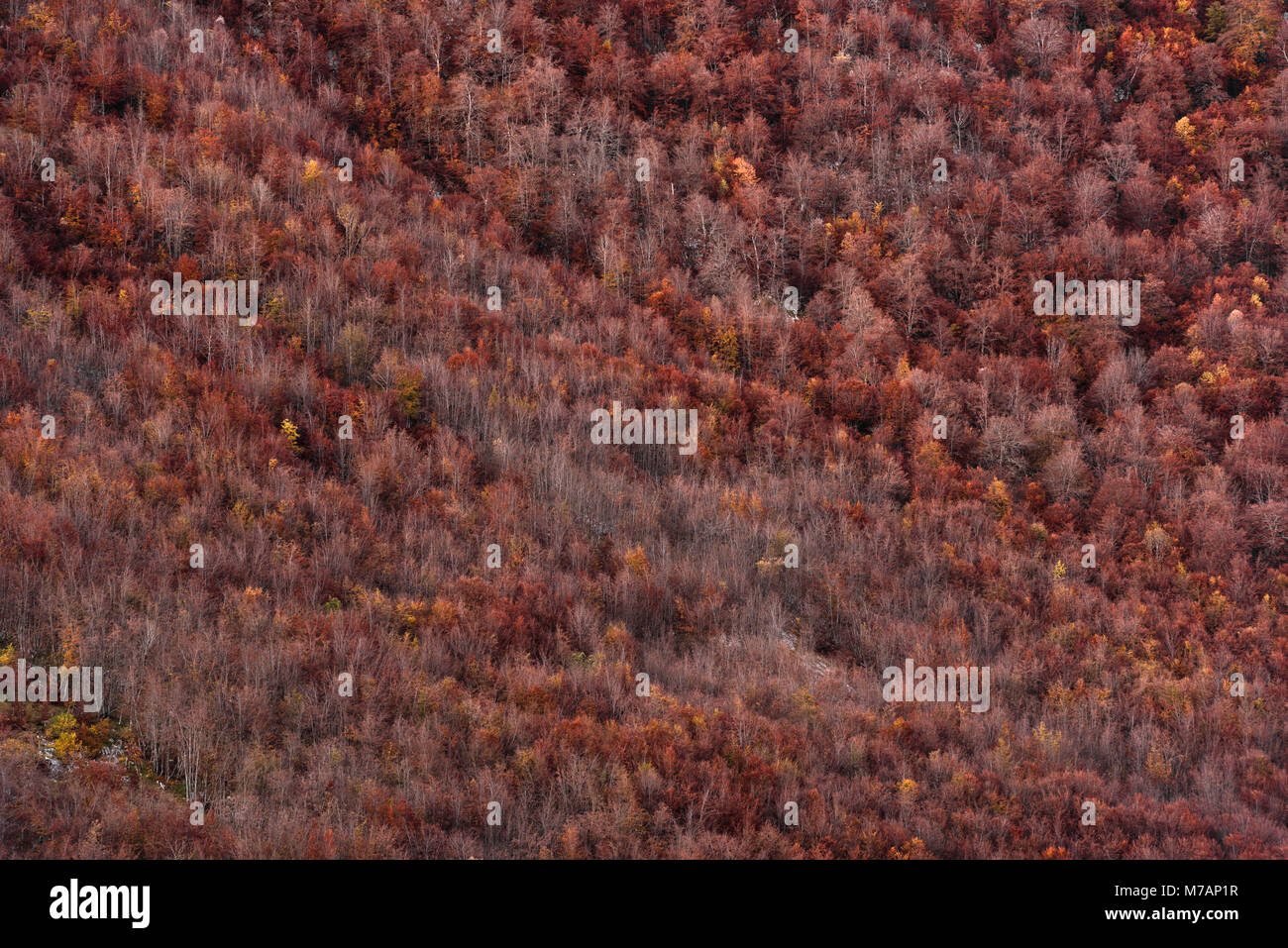 Detail of autumn forest in the Picos de Europa, Cantabria, Spain - Stock Image