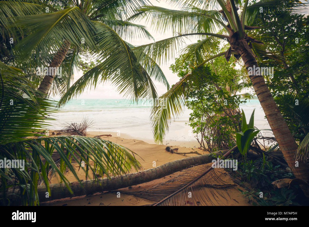 View from the palm beach to the sea, pirate cave on the Caribbean island Puerto Rico - Stock Image