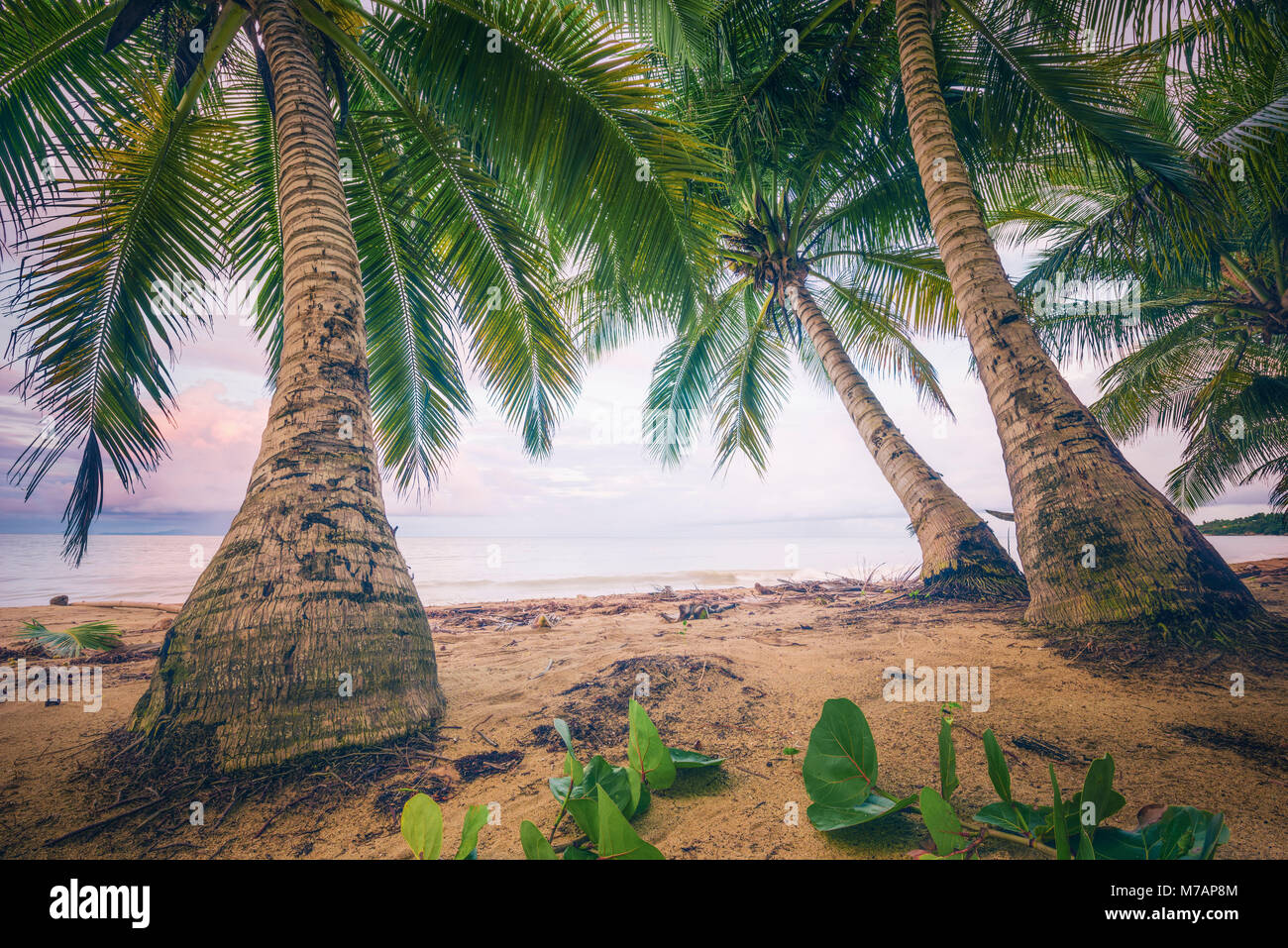 Beach scene in retro style on the Caribbean island Puerto Rico - Stock Image