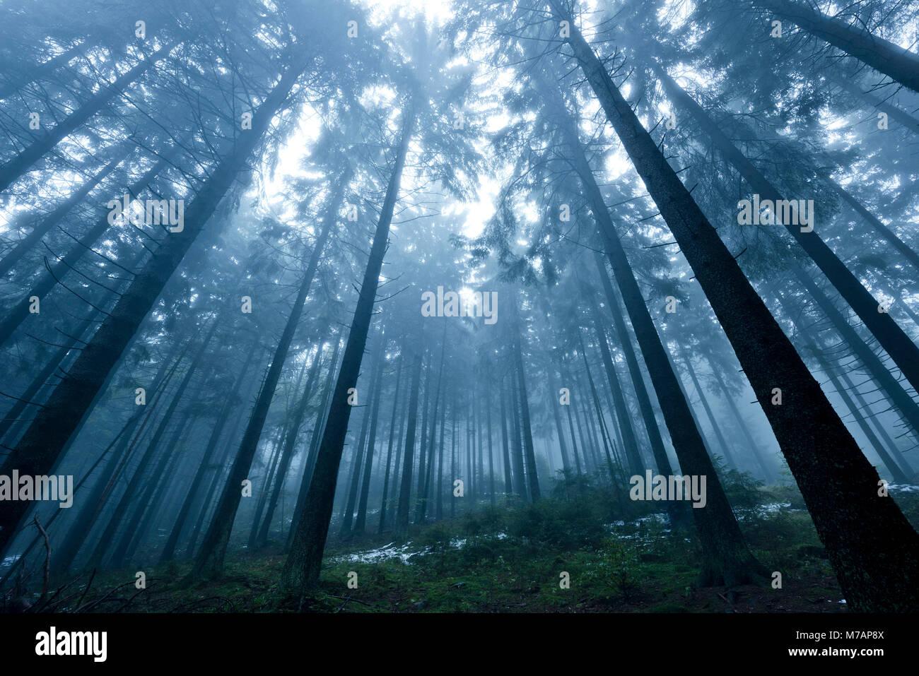 Boubin, in German 'Kubany' primeval forest in the Czech Republic in autumn fog - Stock Image