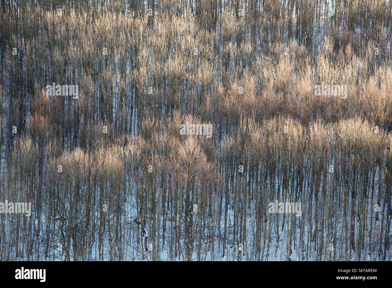 Forest in the winter, Abtsroda, Rhoen Mountain, Hesse, Germany - Stock Image