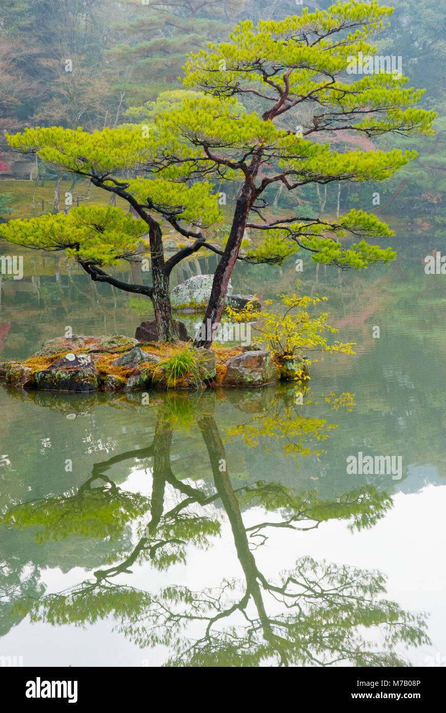 Reflection of trees in a forest - Stock Image