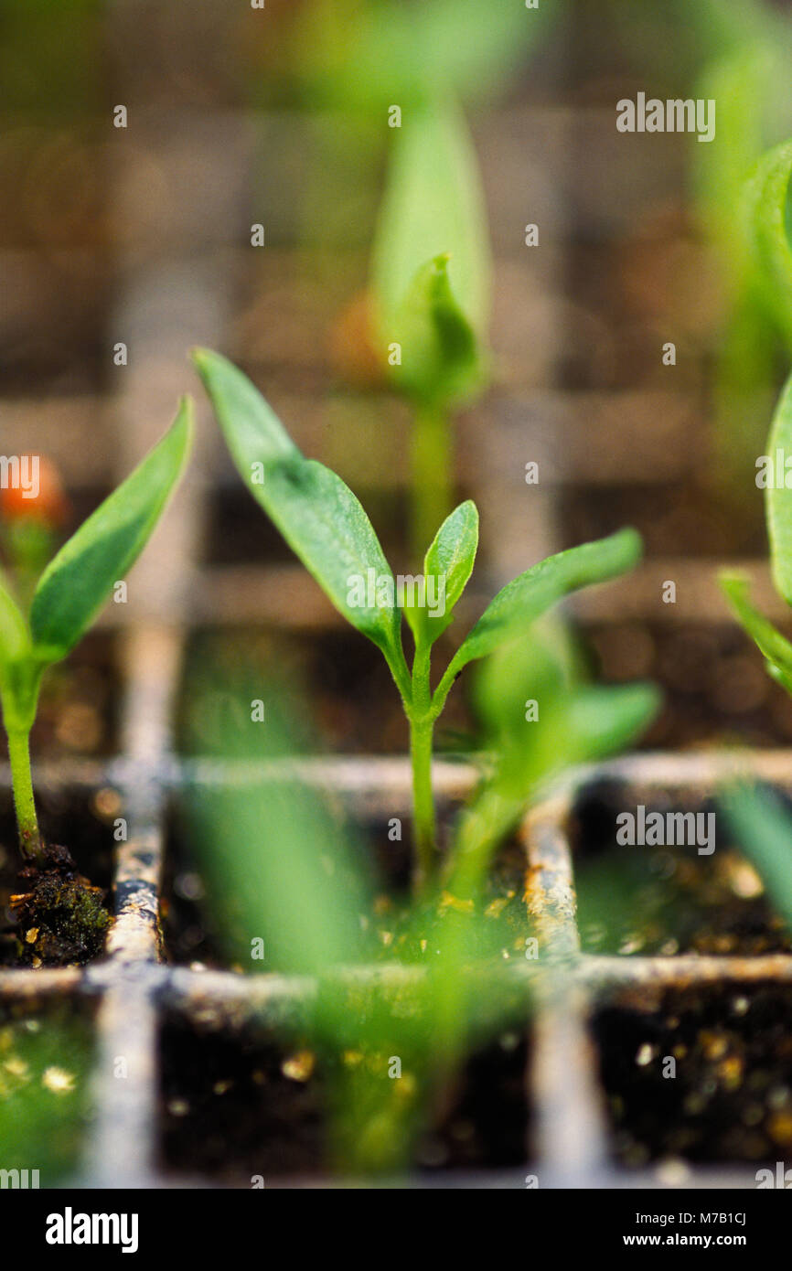 Close-up of plants growing in a farm Stock Photo