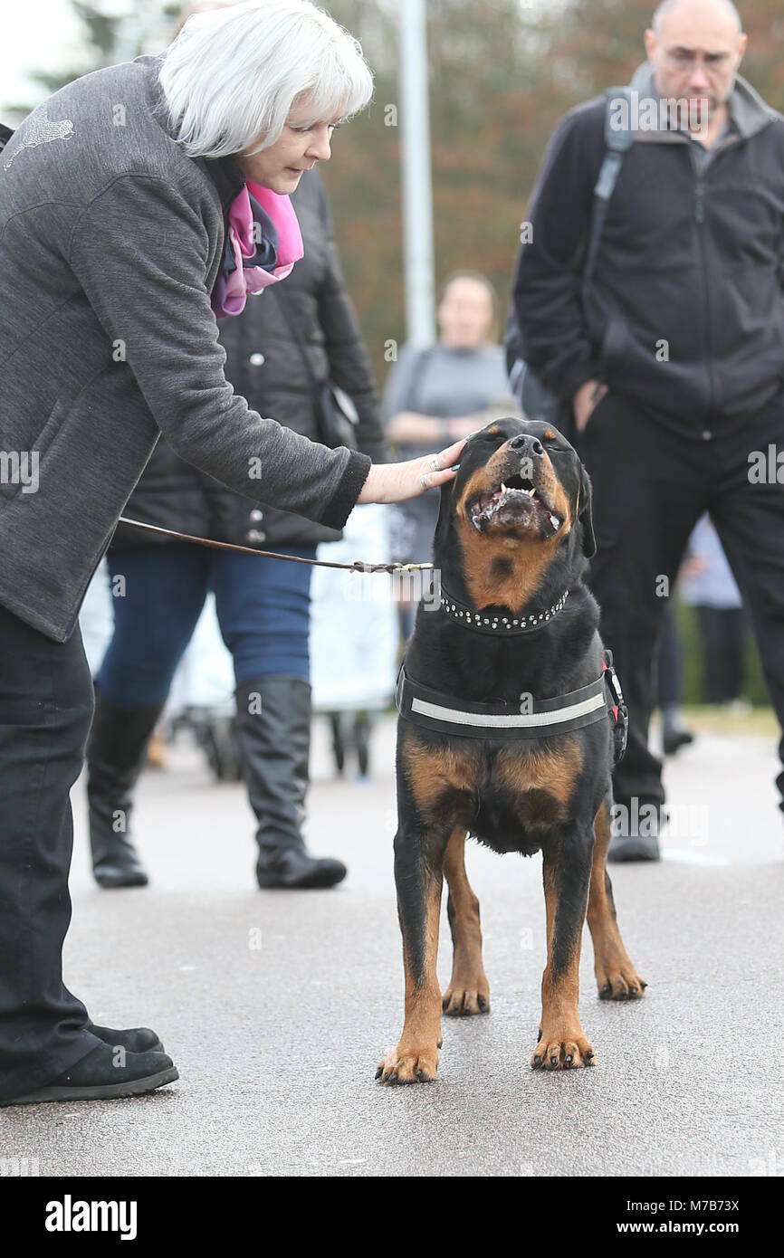 Dogs with their owners arriving at Crufts 2018 - Stock Image