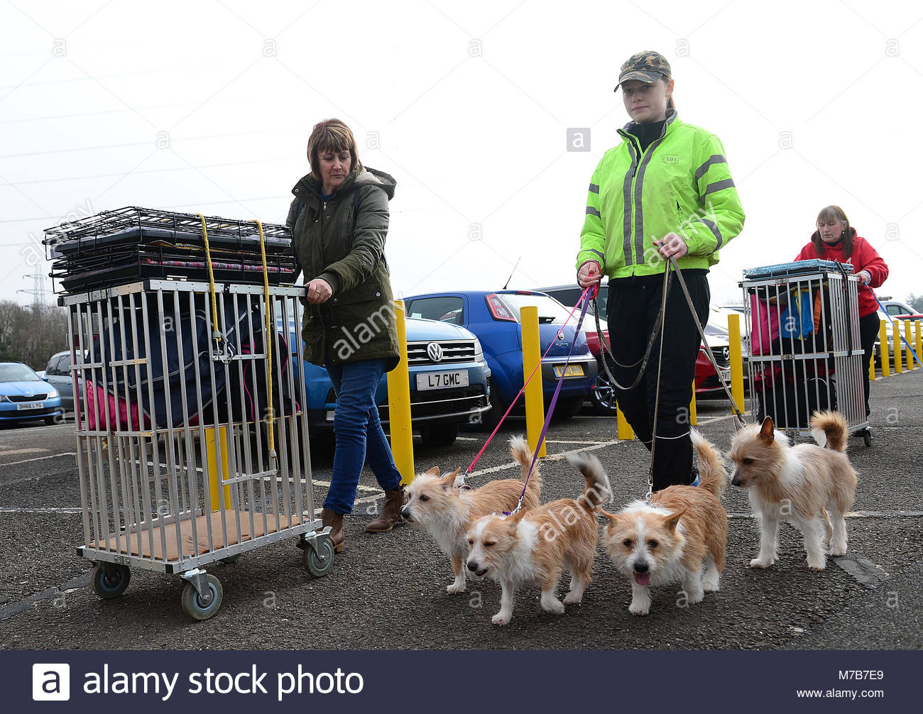 Birmingham, UK. 10 March, 2018. Jamie Sandh fom Sweden arriving at Crufts with her 4 Portuguese Podengo dogs. Picture - Stock Image