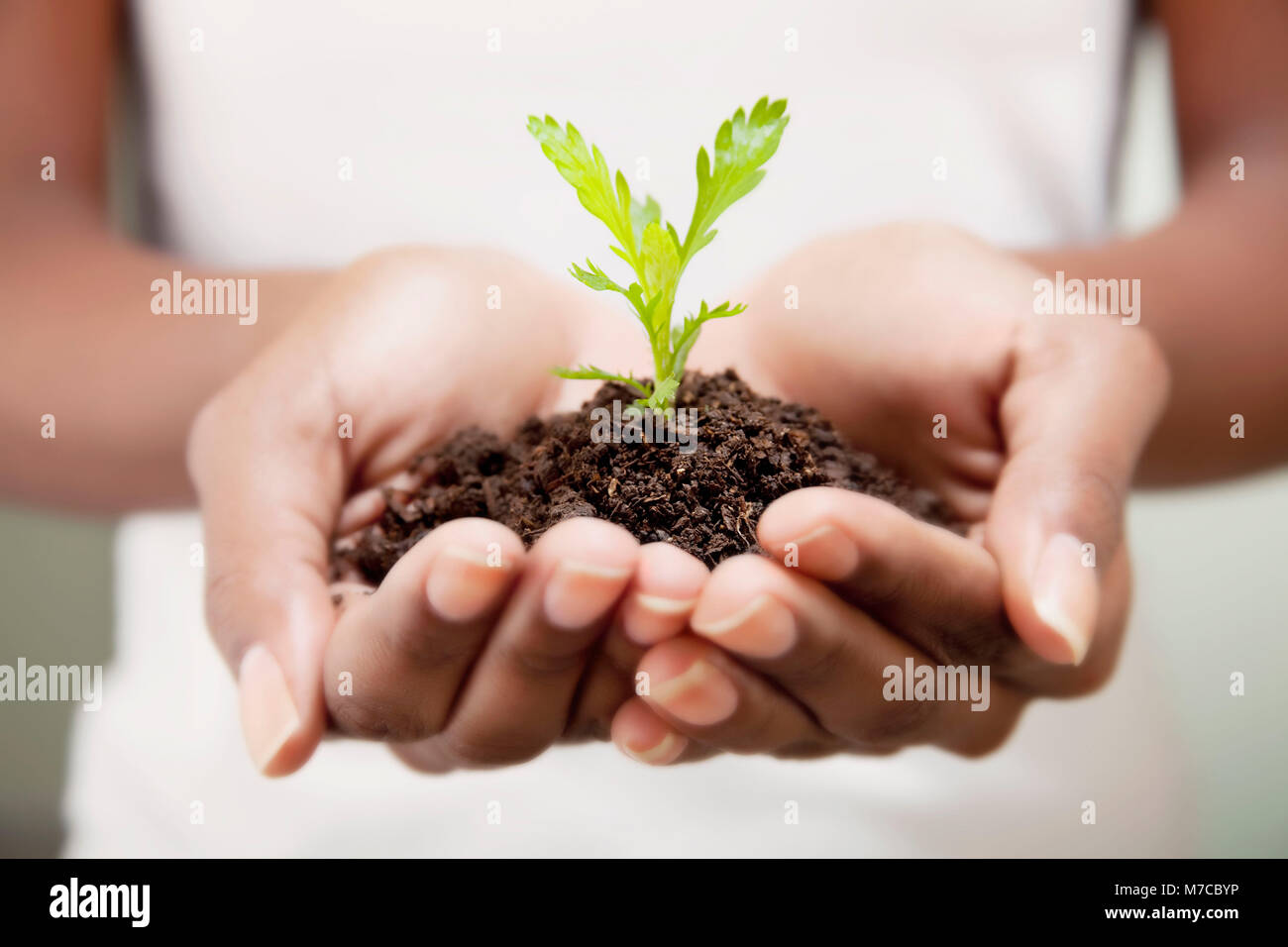 Close-up of a woman's hands holding a seedling - Stock Image
