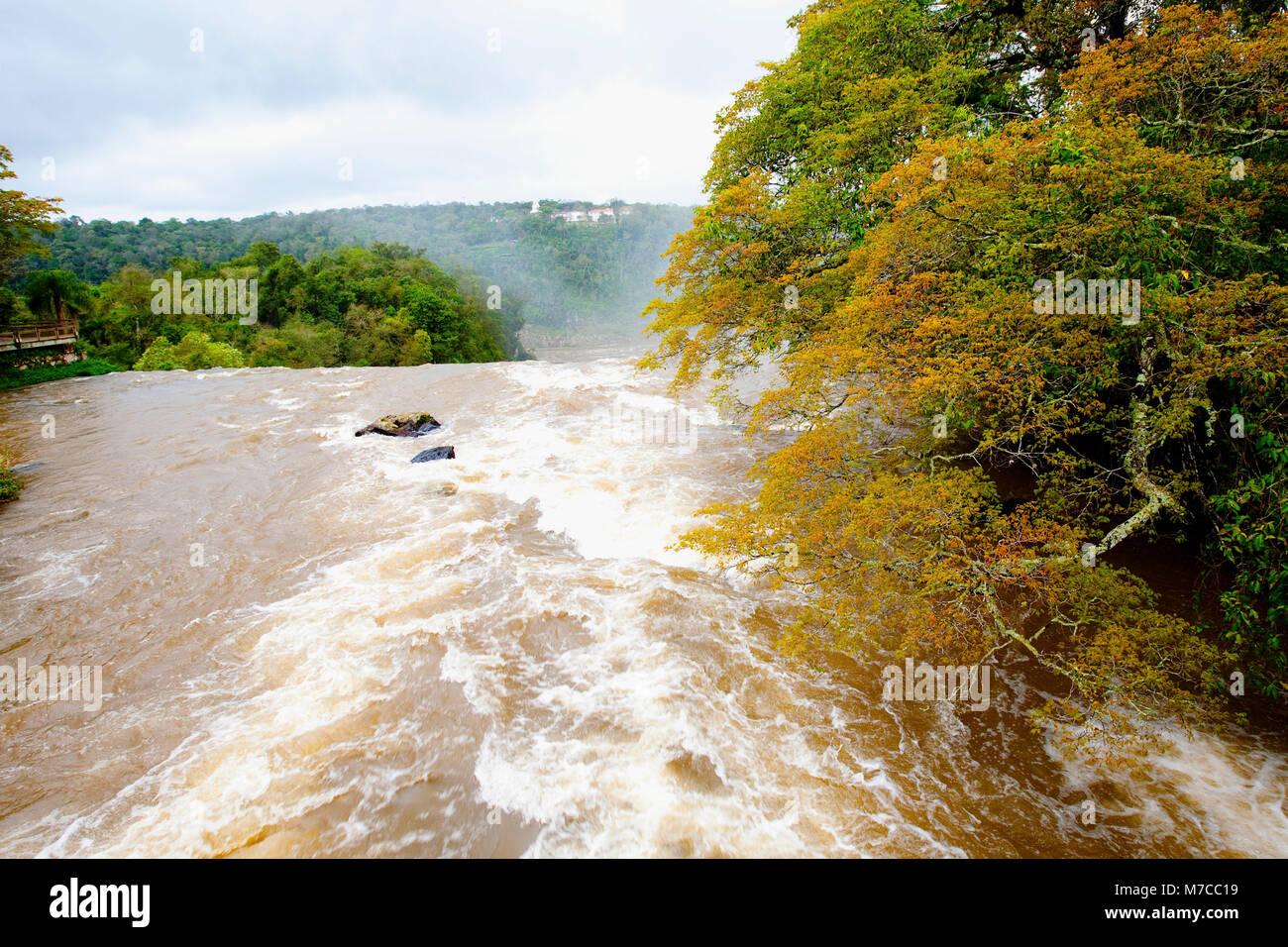 River flowing through a forest, Iguacu River, Puerto Iguazu, Misiones Province, Argentina - Stock Image
