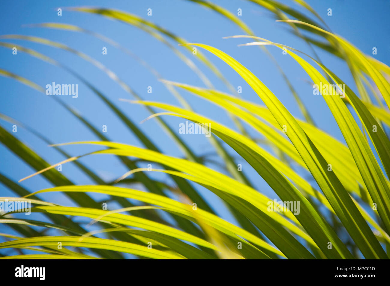 Close-up of a palm leaf Stock Photo