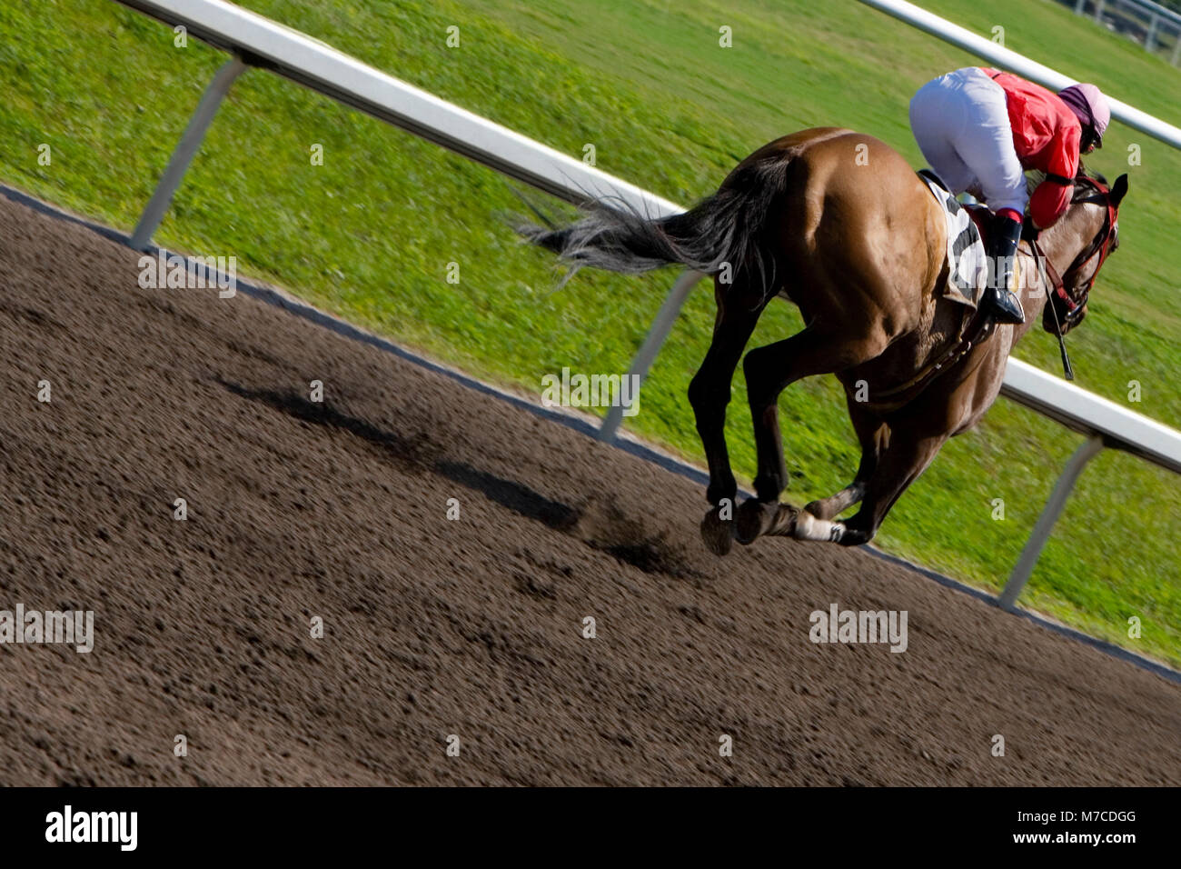 Jockey riding a horse in a horse race - Stock Image