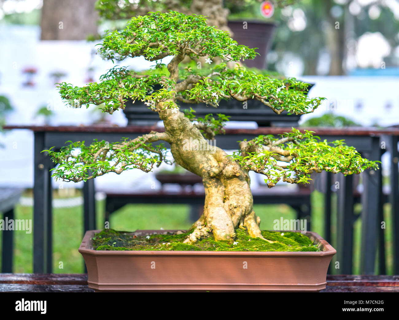 Page 2 Bonsai Rock High Resolution Stock Photography And Images Alamy