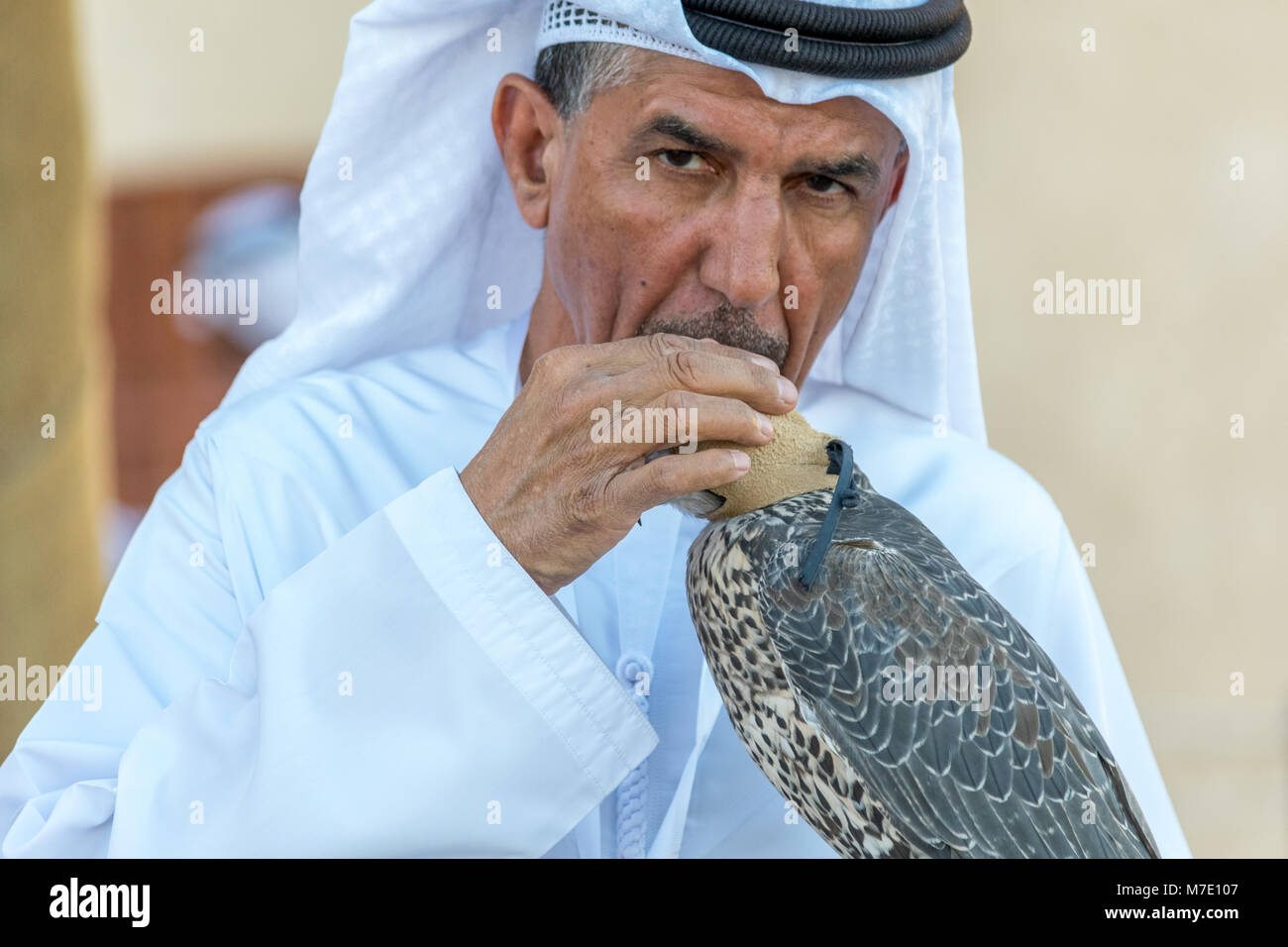 Emirati man in traditional dress placing a hood on a saker falcon hunting bird at the Sheikh Zayed Heritage Festival Stock Photo