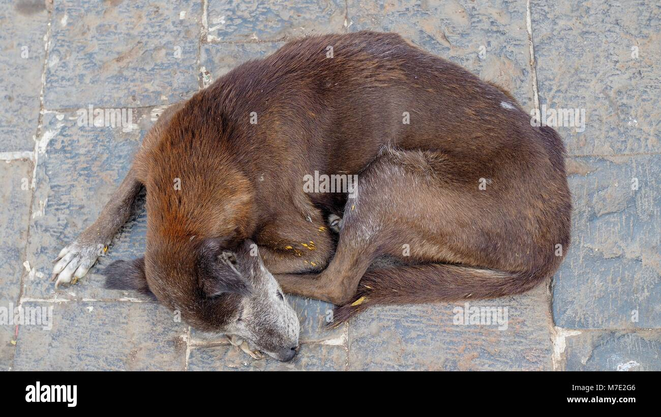 Closeup of street dog sleeping. - Stock Image