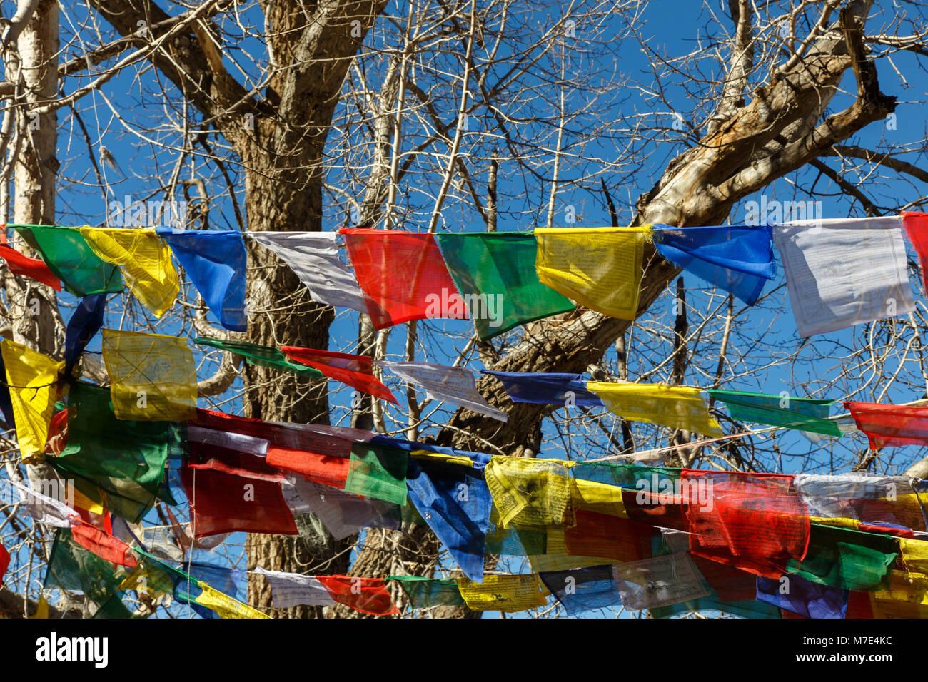 Buddhist prayer flags on a tree, Muktinath, Nepal - Stock Image