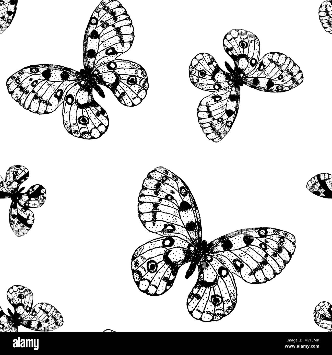 Vector seamless pattern from black and white butterfly Parnassius apollo. Coloring page book background - Stock Vector