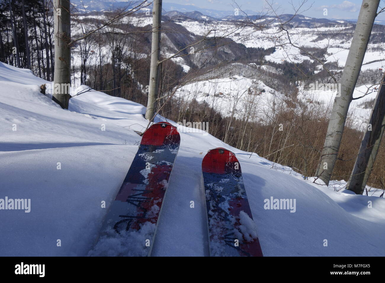 A pair of touring skis in woods turned downhill ready for off-piste ride. - Stock Image