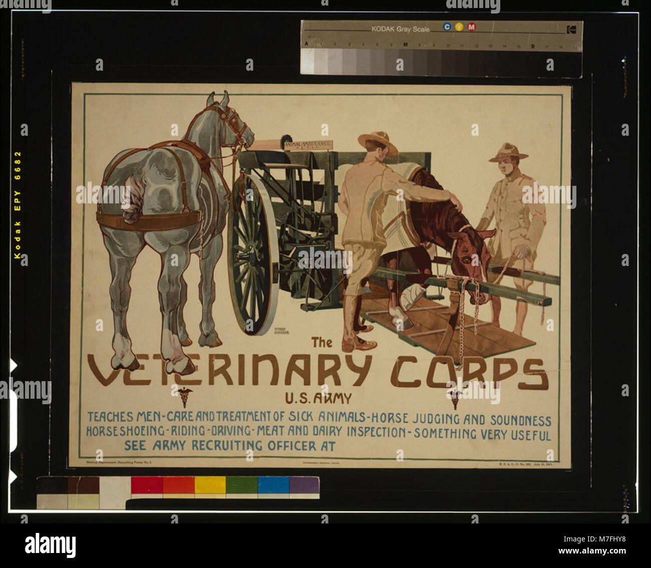 The Veterinary Corps, U.S. Army, teaches men care and treatment of sick animals; horse judging and soundness; horseshoeing; - Stock Image