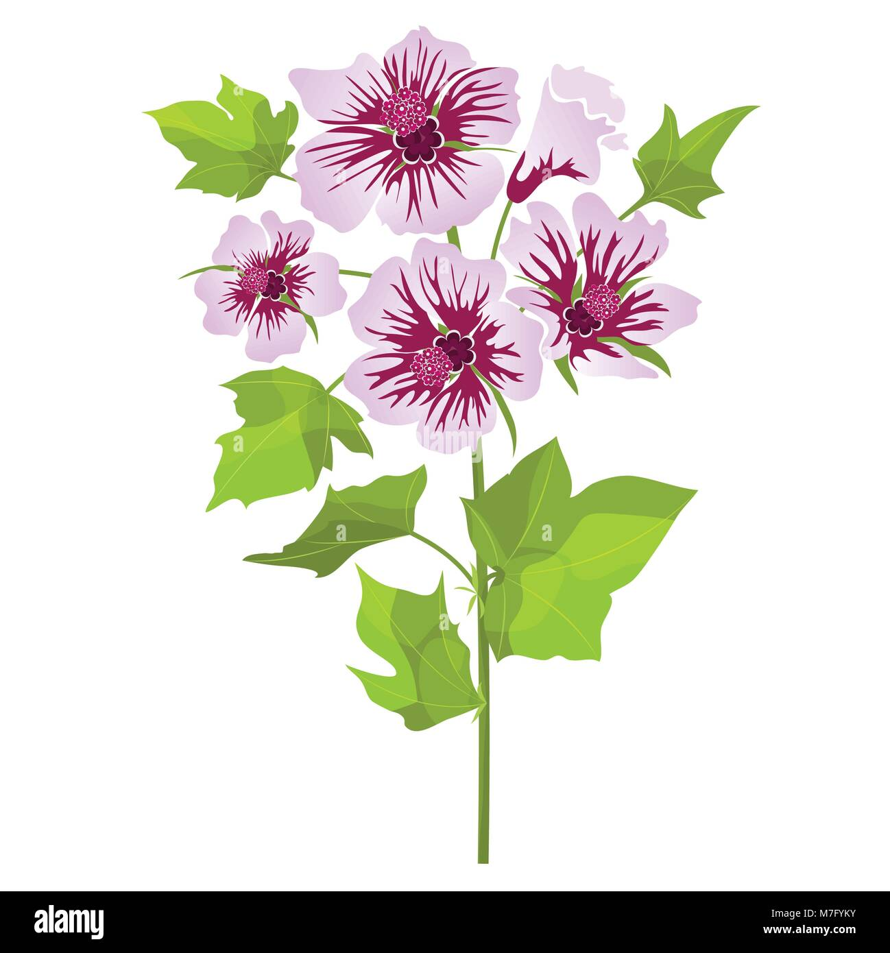 Pink flowers mallow with green leaves, isolated on white background. Vector illustration - Stock Vector