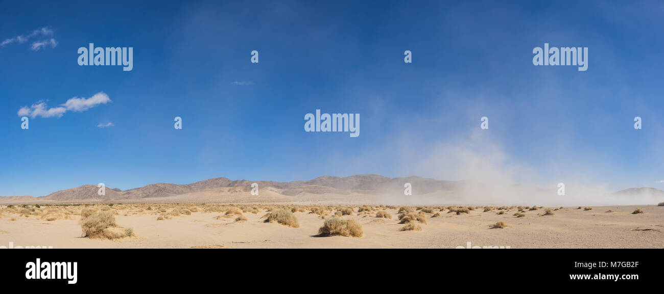 Wide expanse of brush growing in the open sand of the Mojave Desert in southern California. - Stock Image