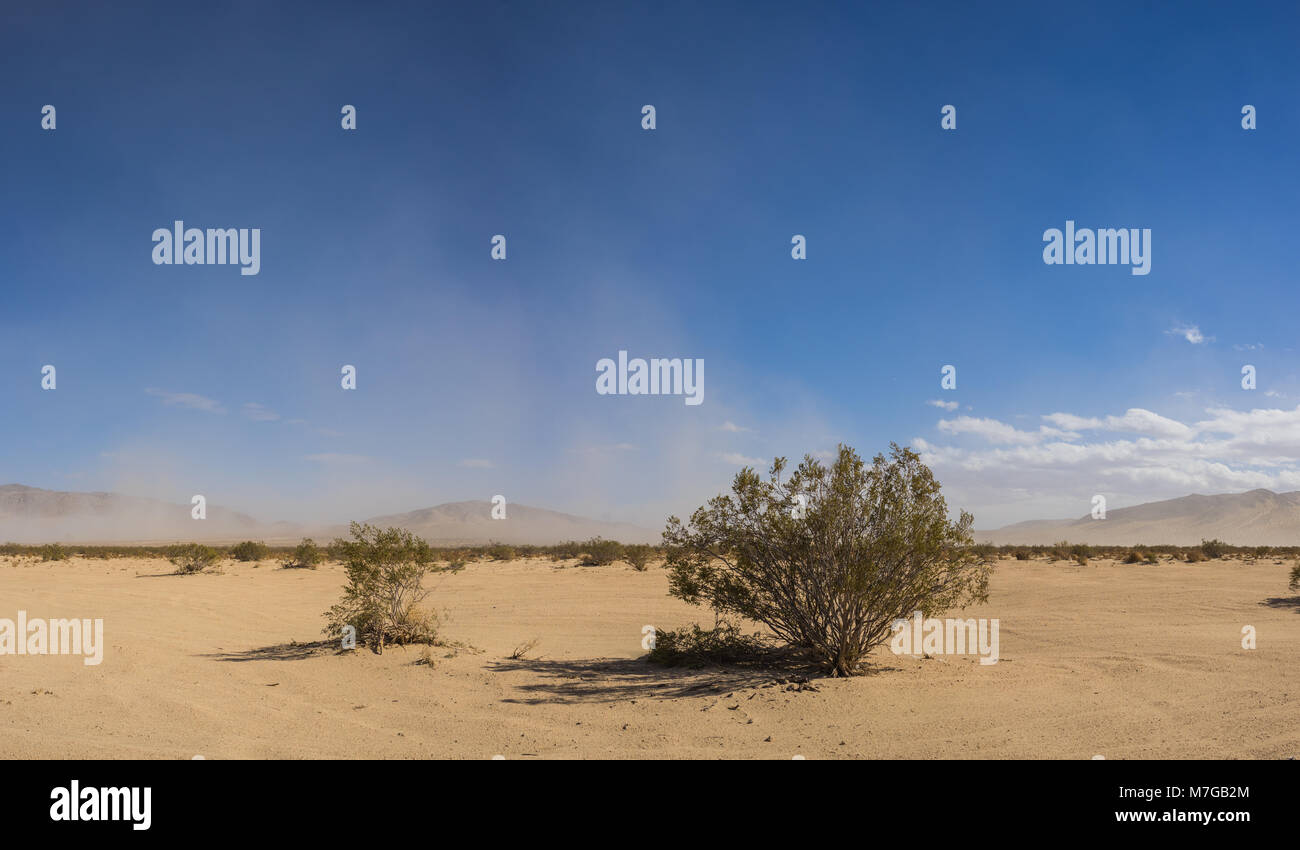 Stretch of brush grows across sandy expanse of desert in the Mojave of California. - Stock Image