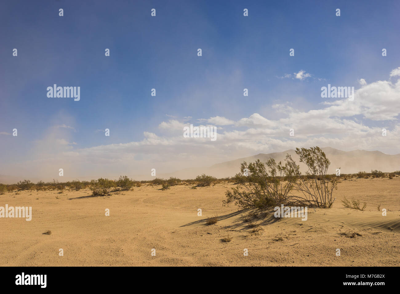 Thin green brush grows in the sand of a massive blowing desert. - Stock Image