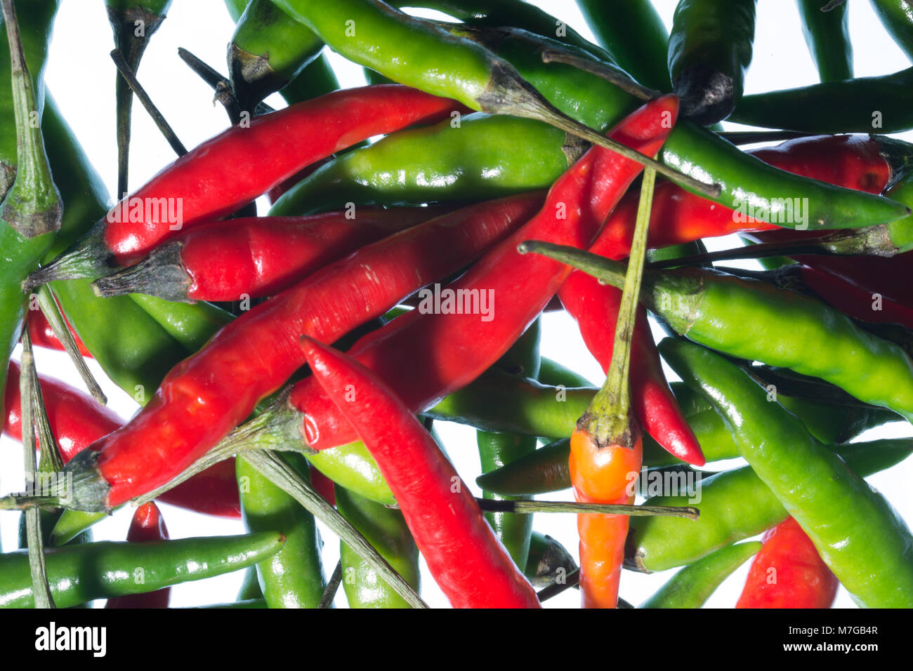 The Chilli Pepper, often called Chili Pepper, Chile Pepper or Chilli, is a fruit of the Capsicum family. They are - Stock Image
