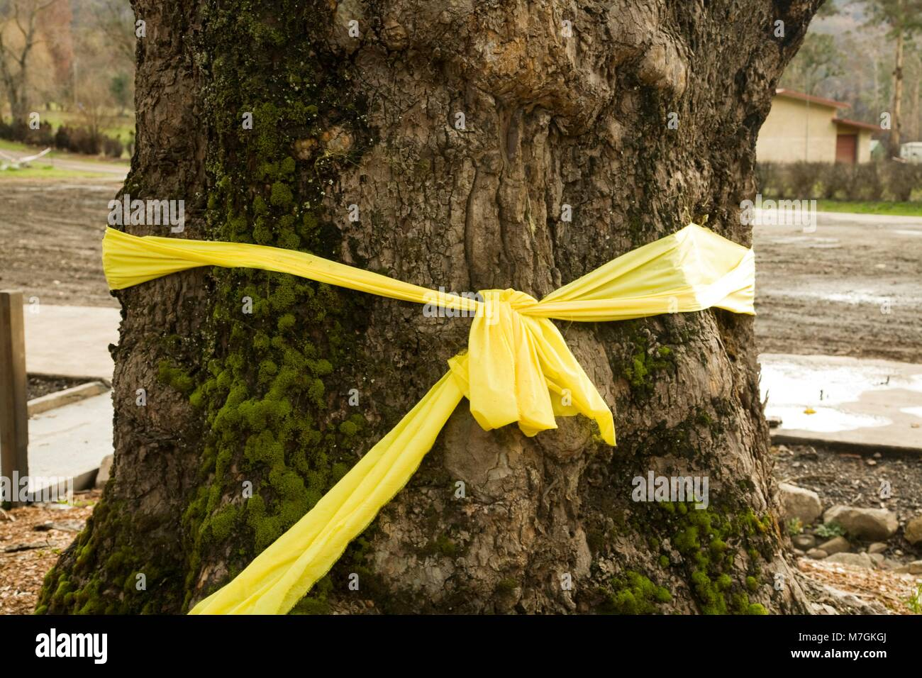 YELLOW RIBBON TO COMMEMORATE THE LOSSES DURING THE FIRE OF 2009, MARYSVILLE, MELBOURNE, AUSTRALIA - Stock Image
