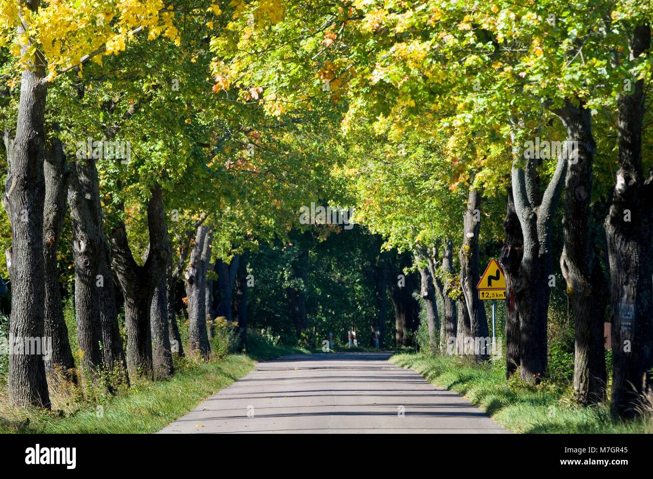 Tunnel Of Foliage Stock Photos & Tunnel Of Foliage Stock Images - Alamy