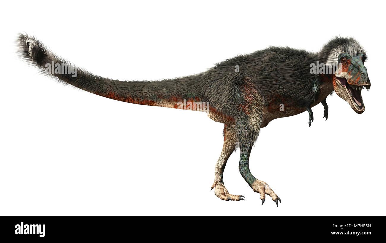 Daspletosaurus dinosaur on white background. - Stock Image