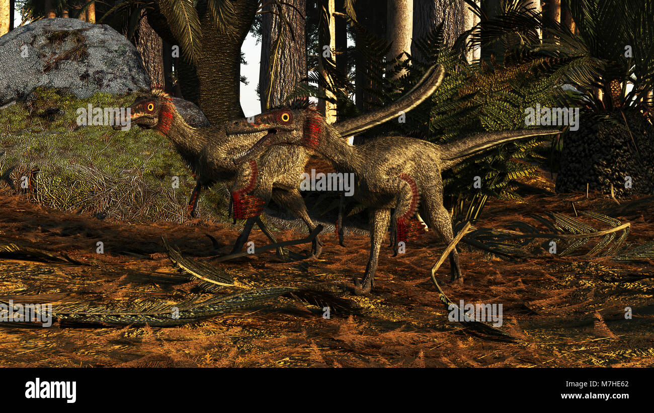 A pair of Buitreraptor dromaeosaurs of South America. - Stock Image