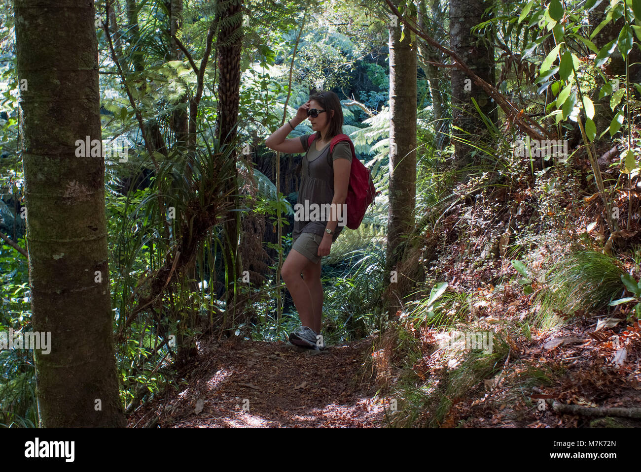 A young woman tramping through Kauri forest stops to look at the view. - Stock Image