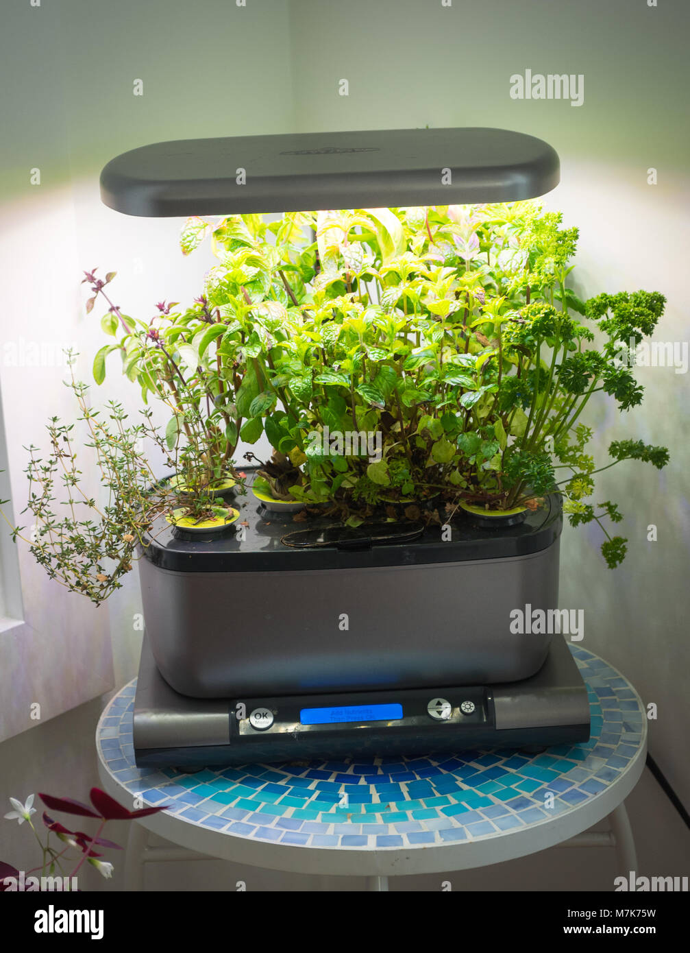 Aerogarden Indoor Garden An miracle gro aerogarden a popular home indoor garden that uses an miracle gro aerogarden a popular home indoor garden that uses hydroponics to grow herbs and vegetables workwithnaturefo