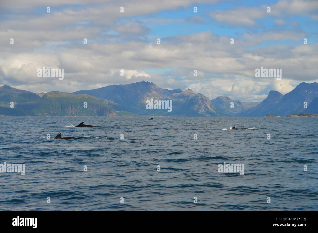 Whales passing through a fjord in norway on a beautiful day. - Stock Image