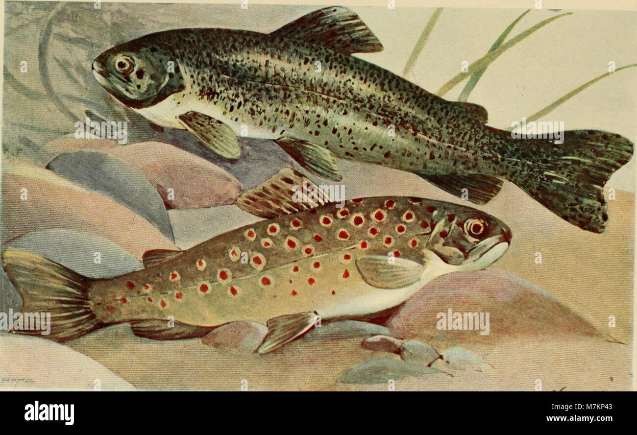 Blätter für Aquarien- und Terrarien-Kunde (1901) (20199802869) Stock Photo