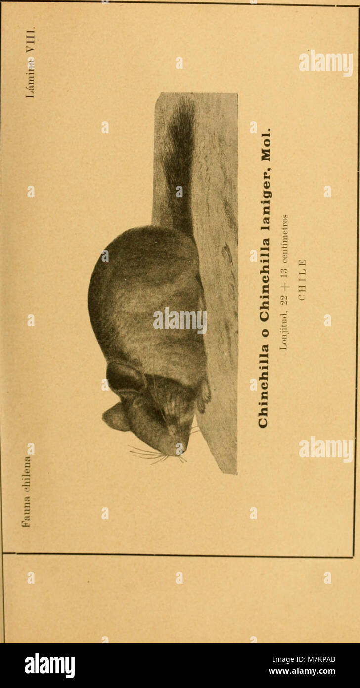 Boletín del Museo Nacional de Chile (1911) (20201245718) Stock Photo